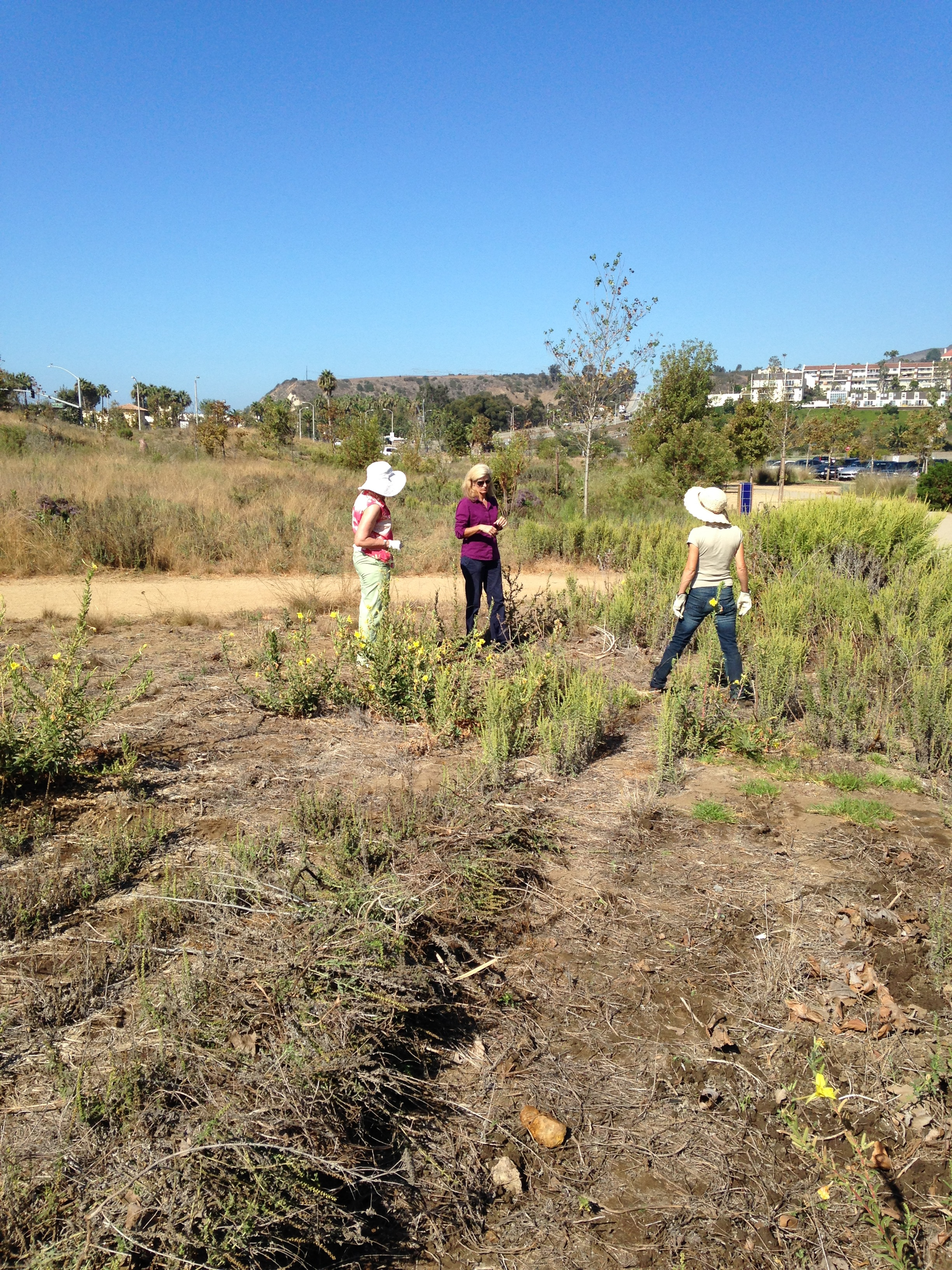 Volunteers Prepared The Area Allocated To The Butterfly Garden By Malibu  City And Planted Milkweed And Other Butterfly Friendly Plants.